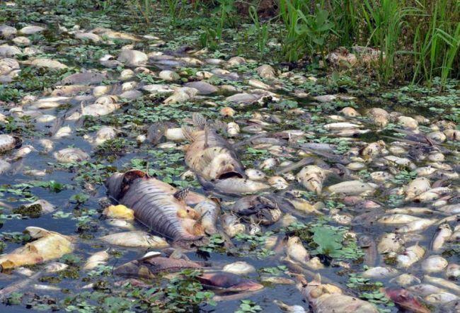 peixes pantanal