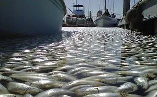 peixes california